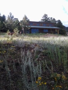 studio mw_beetlekill ranch (147)